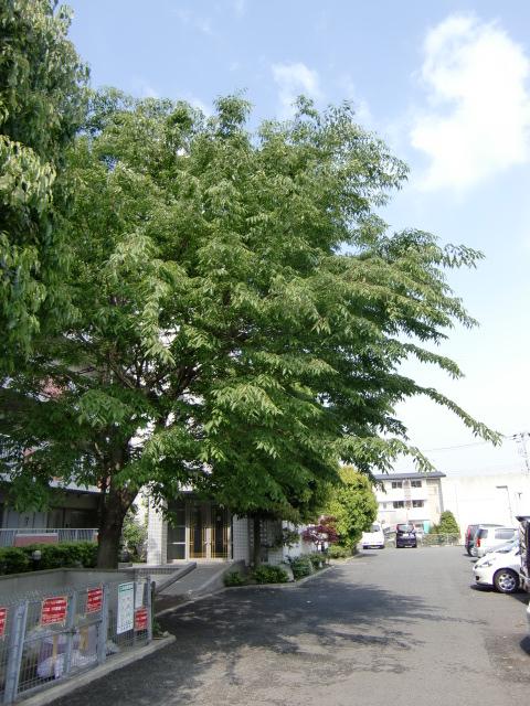 大阪府羽曳野市 植木の伐採・剪定
